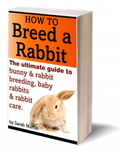 Book Cover - How To Breed A Rabbit