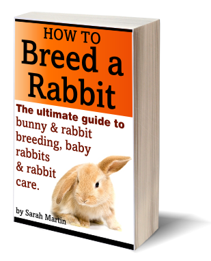 Book Cover – How To Breed A Rabbit